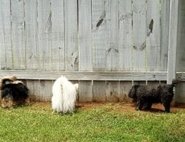puppy proof fence