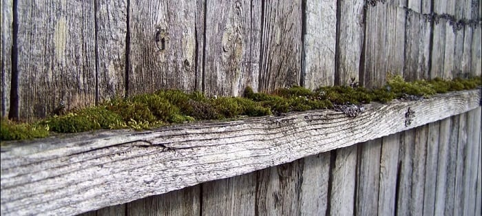 Sun Damage, Moss and Mold on Wood Fences