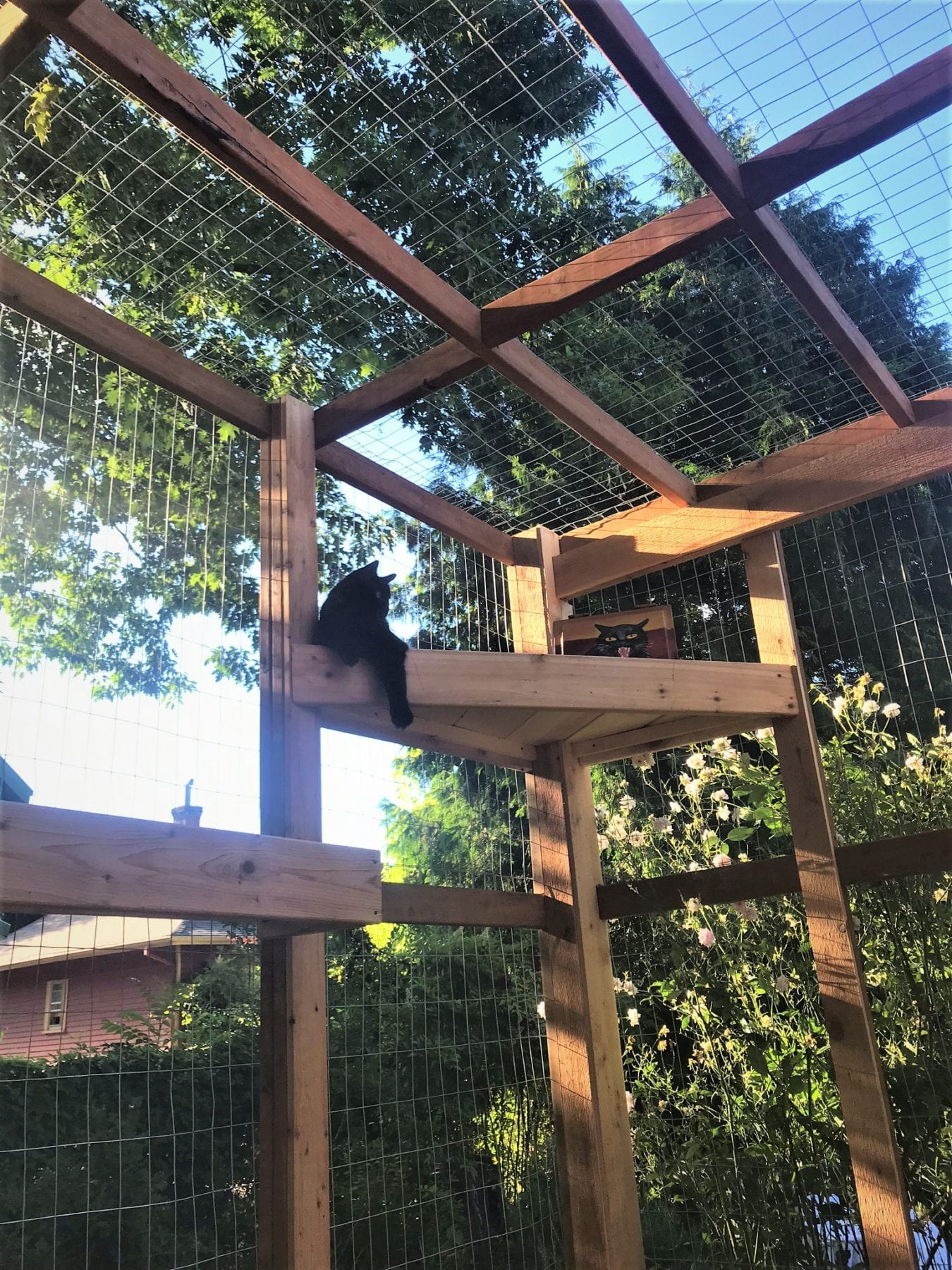 backyard catio
