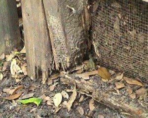 Signs Of Termites And How To Prevent Them