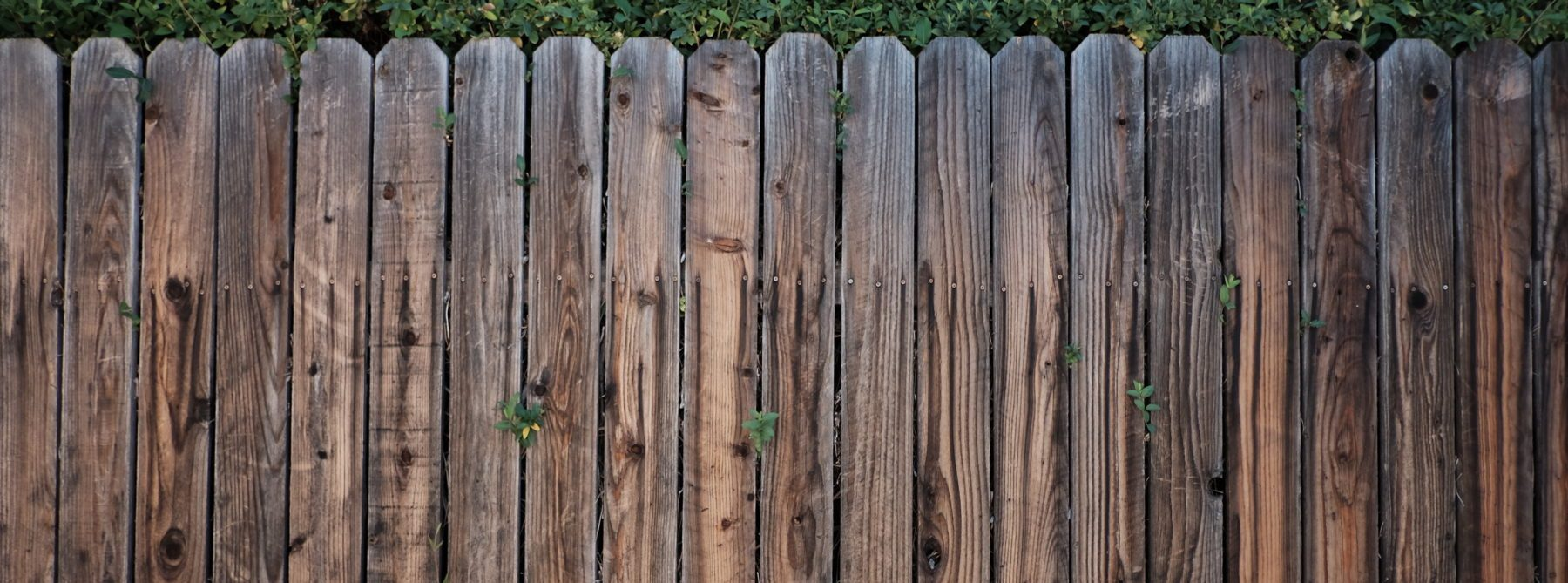 stained fence pickets